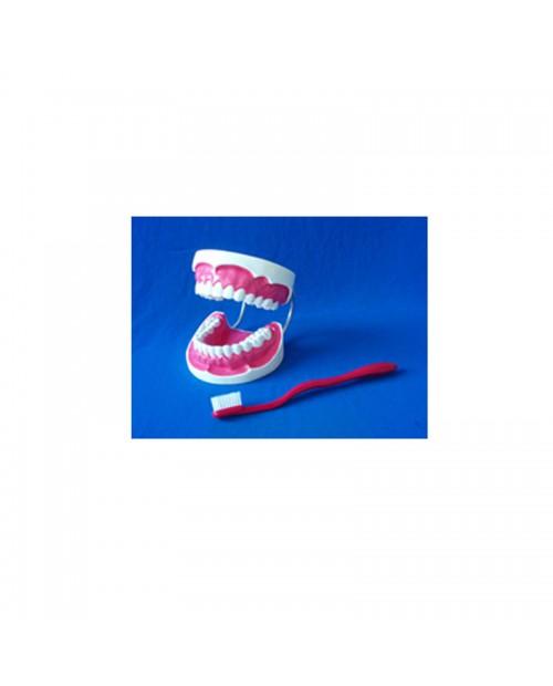 Modèle de soins de dents